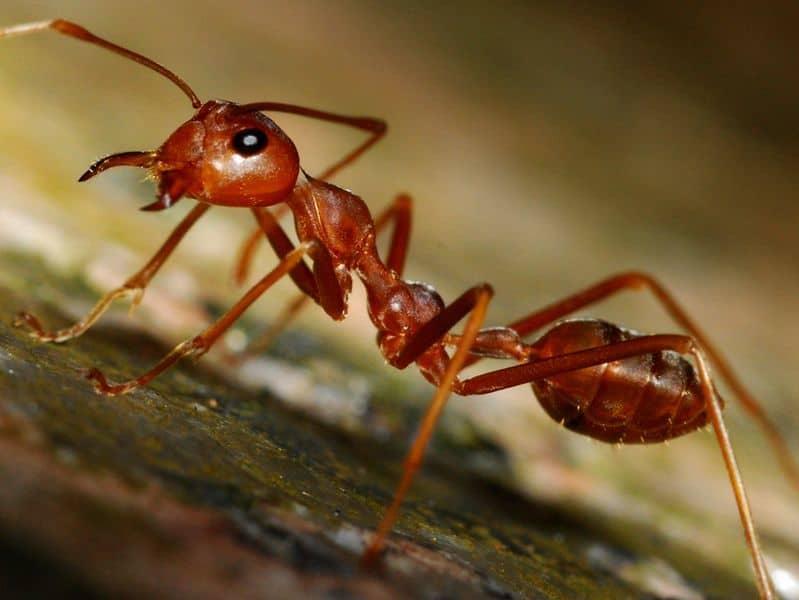 Как нам удалось избавиться от муравьев в квартире