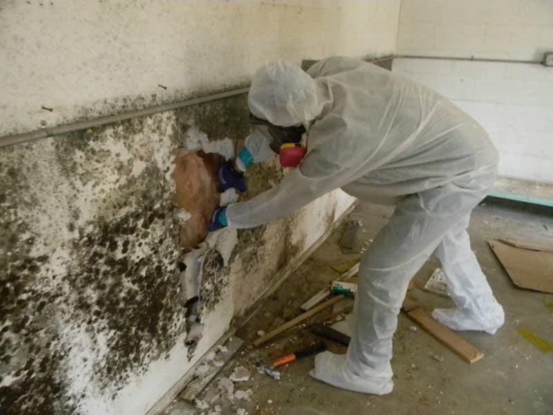 Избавляемся от грибка на стенах – чем и как убить опасную плесень раз и навсегда