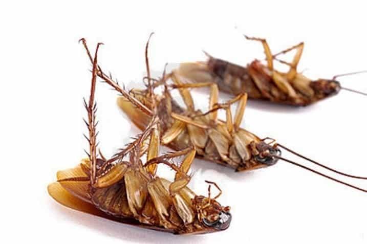Смертельная инъекция Дохлокс гель-шприц от тараканов