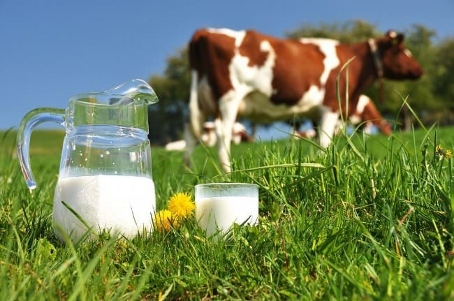 Перед использованием, молоко нужно закислить