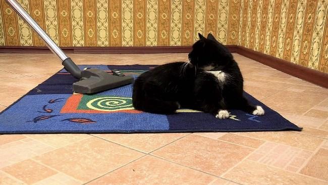 Шерсть на ковре