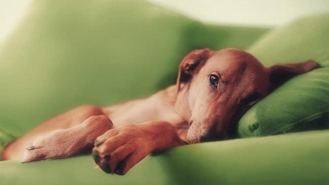 Чистка дивана после собаки