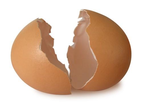 Скорлупа яйца