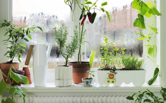Растения препятствуют попаданию горячего воздуха