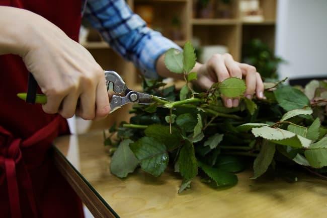 Чтобы надолго сохранить розы, оборвите нижние листочки, бордовые отростки, шипы до поверхности воды