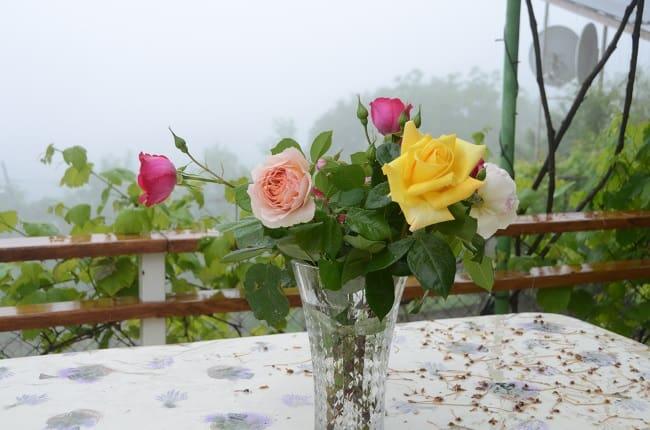 Срезанным розам нужна прохлада