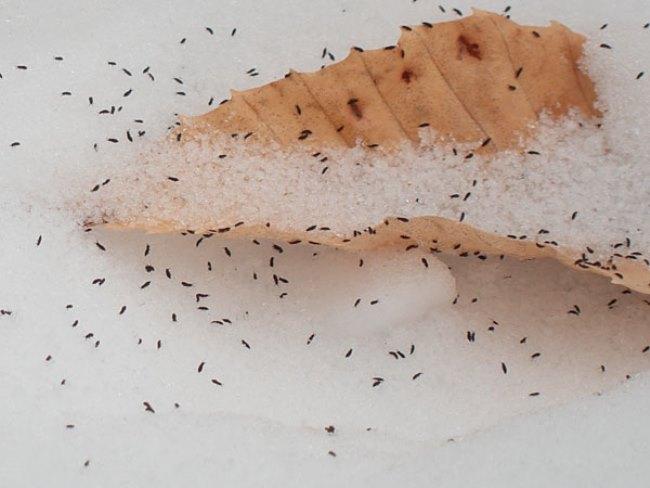 Активно размножаются насекомые летом и осенью