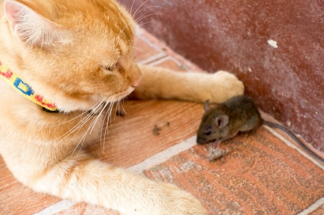 Доверьте это дело кошке