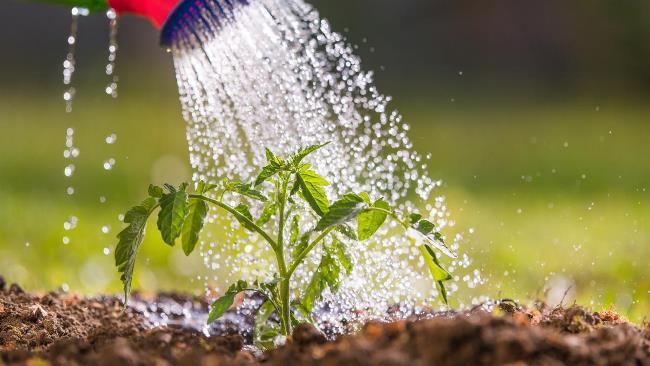 Каустик не только поможет поддержать чистоту в доме, с его помощью защищают сад и огород от вредителей