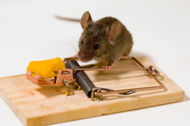 Необходимо каждый раз заряжать устройство после ложной сработки или пойманной мышки