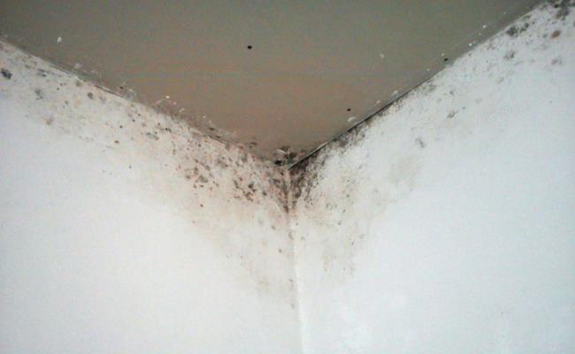 При таких условиях быстро начнет развивать плесень и грибок, заражая домочадцев различными заболеваниями