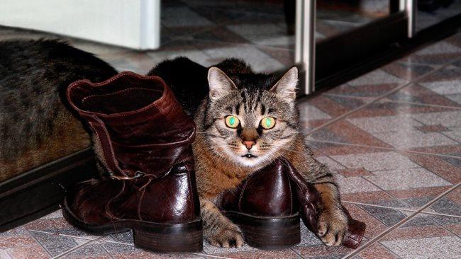 Обувь быстро впитывает запах и отмыть ее довольно сложно