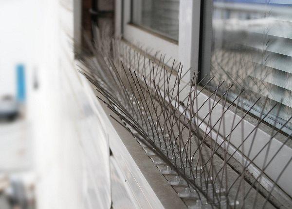 Отпугивающие шипы помешают птица садиться на балкон