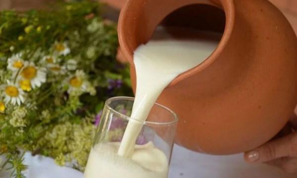 Свежее домашнее молоко нежелательно сразу убирать в холодильник