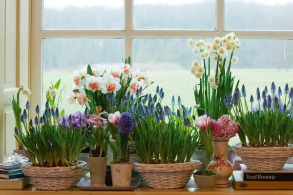 Повысьте влажность с помощью живых цветов