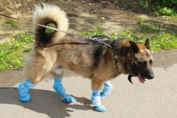 бахилы для собак