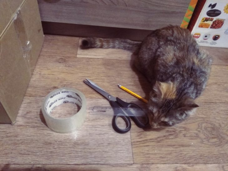 вырезаем в коробке дверь для кота