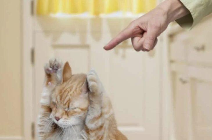 накричать на кота