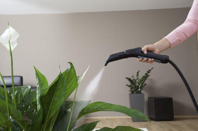 промываем листочки растений
