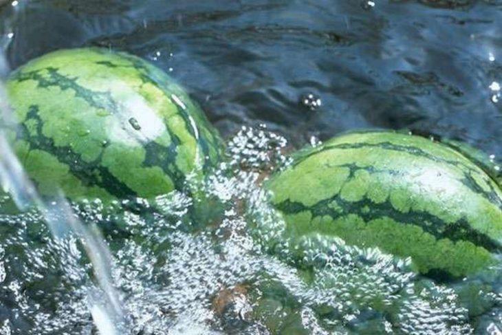 арбузы лежат в воде