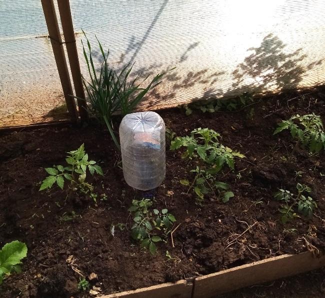 капельный полив с помощью пластиковой бутылки