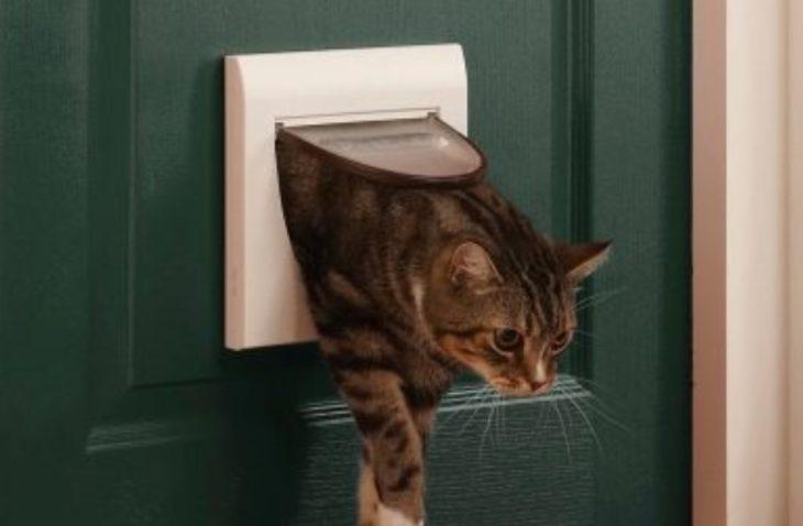 дверь для кота в туалет