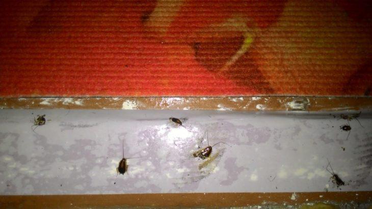 скотч останавливает тараканов